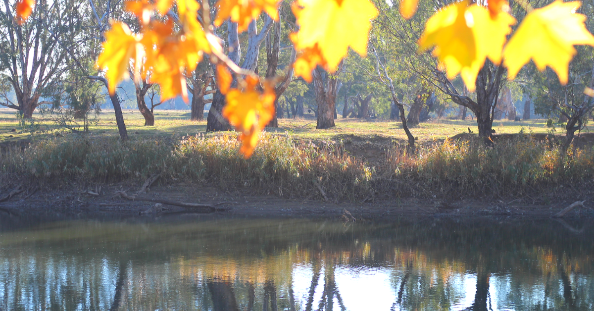 The Murray River in Autumn